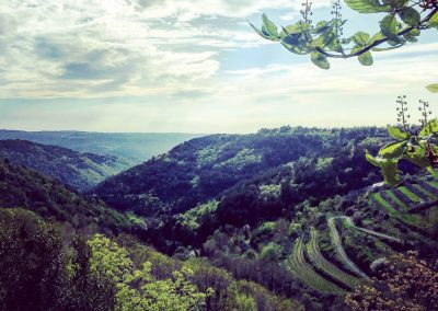 View from Piemonte, Istria - the kind of scenery which surrounds Zrenj