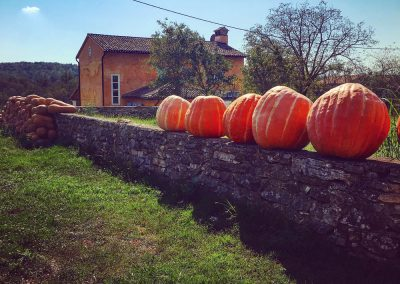 Pumpkins, Poropati, Istria - the colours of around our village of Zrenj