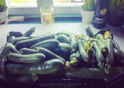 Courgettes, gifted by our neighbour
