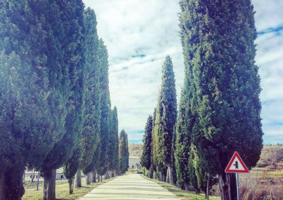 The cypress tree lined road to Oprtalj, Istria. When we arrive at these trees, we know we are nearly home, in Zrenj.